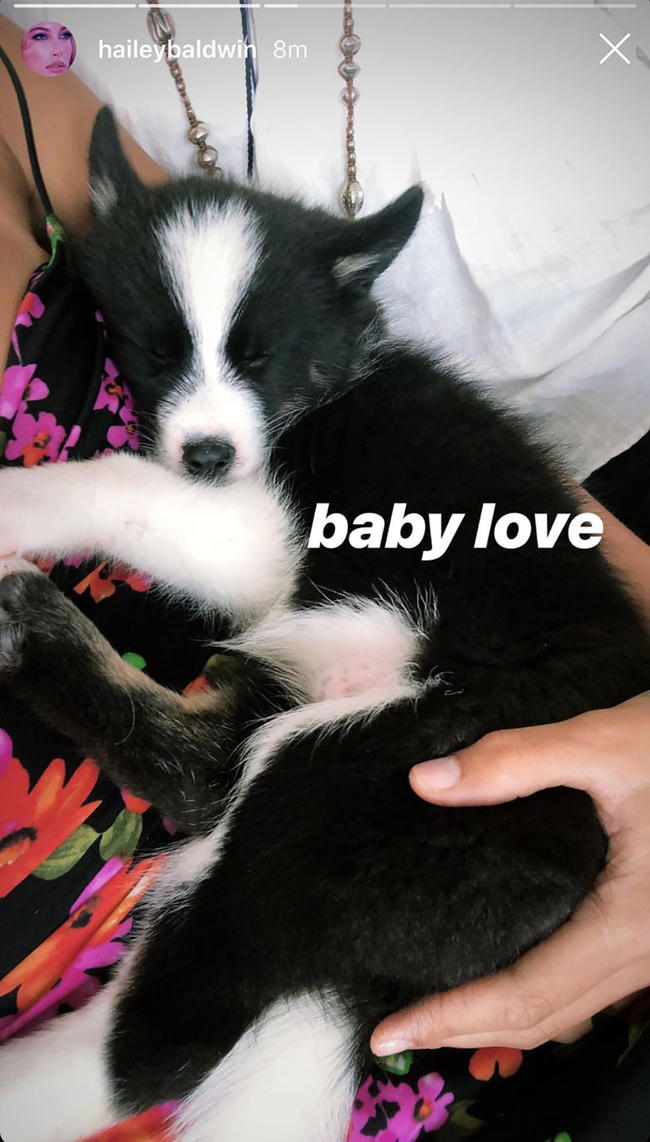 Have Hailey Baldwin and Justin Bieber adopted this adorable husky dog?